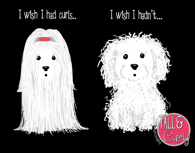 Tall N Curly - Bichons