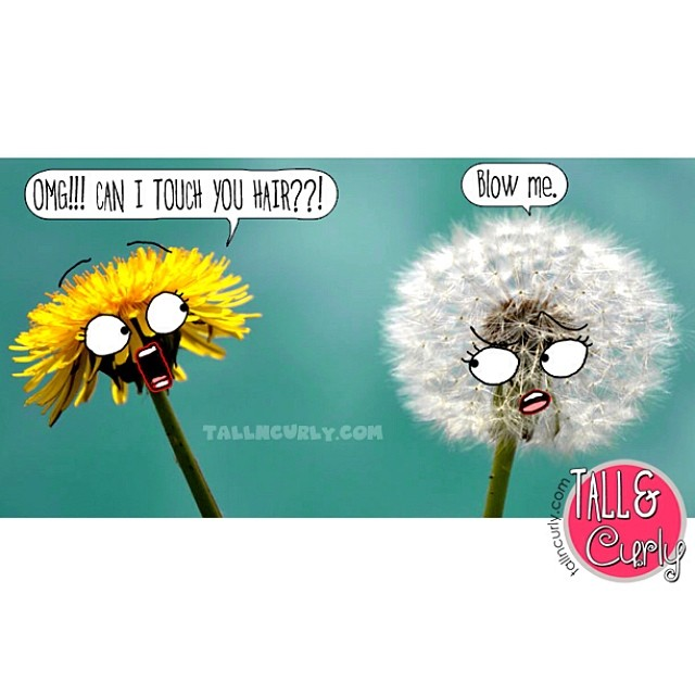 Remember the berries ? Now meet the dandelions. ? tallncurly.com #tallncurly #curlyhairproblems #donttouchmyhair
