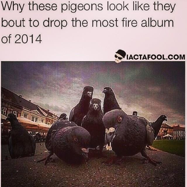 LMAOOOOOOO #pigeons #badasses